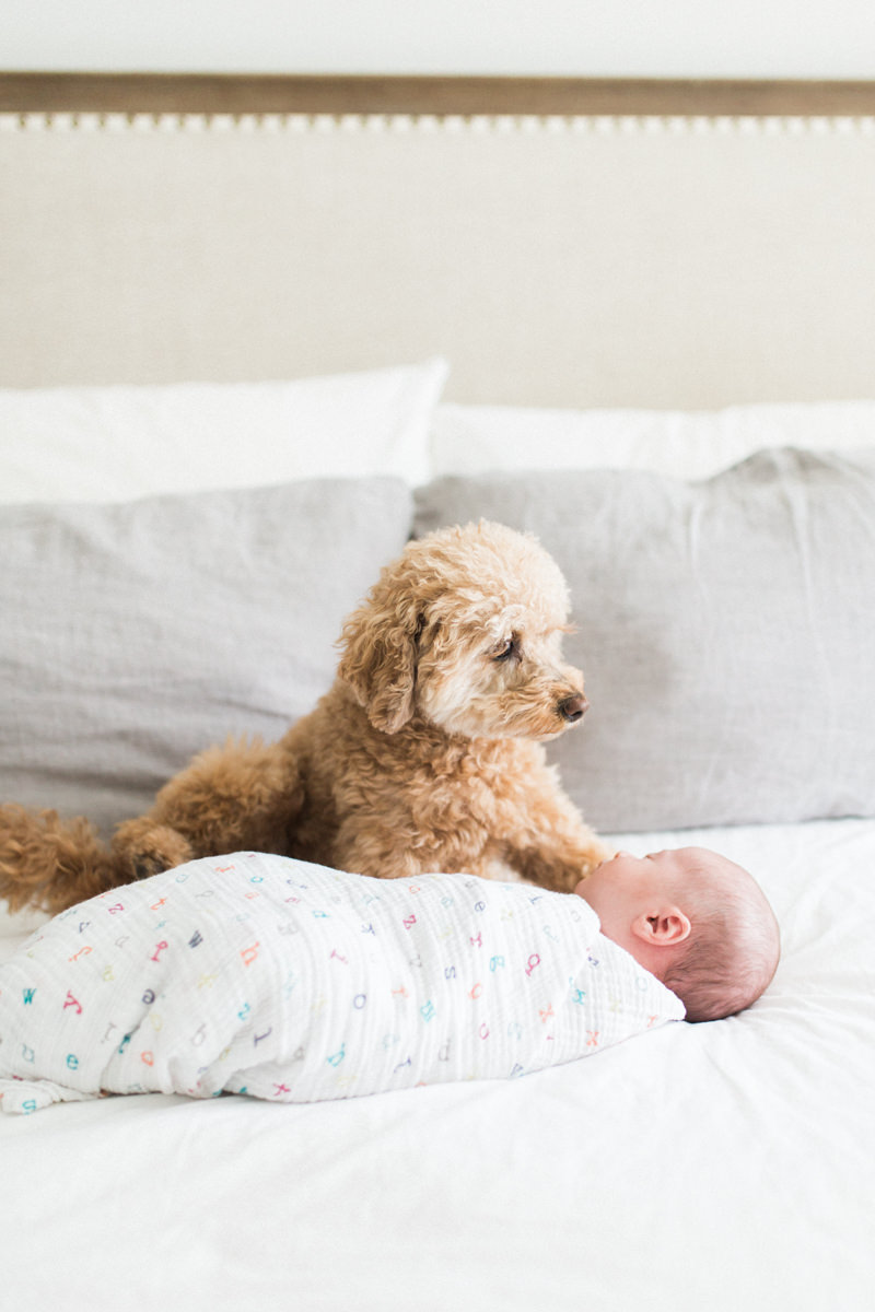 Calgary Newborn Photography in home session dog